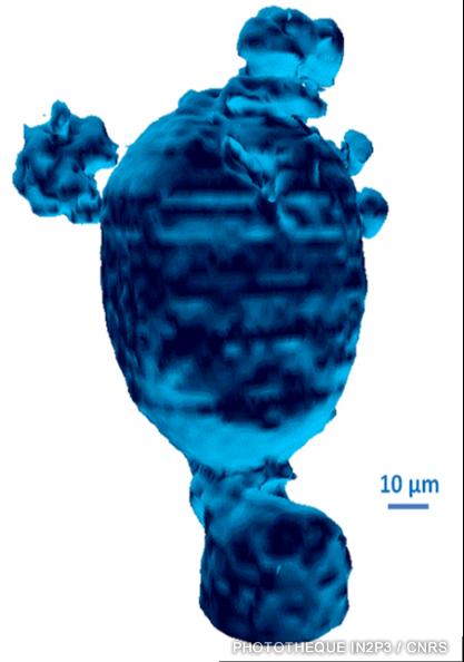 La première image 3D en tomographie protonique d'une cellule humaine isolée. 1998
